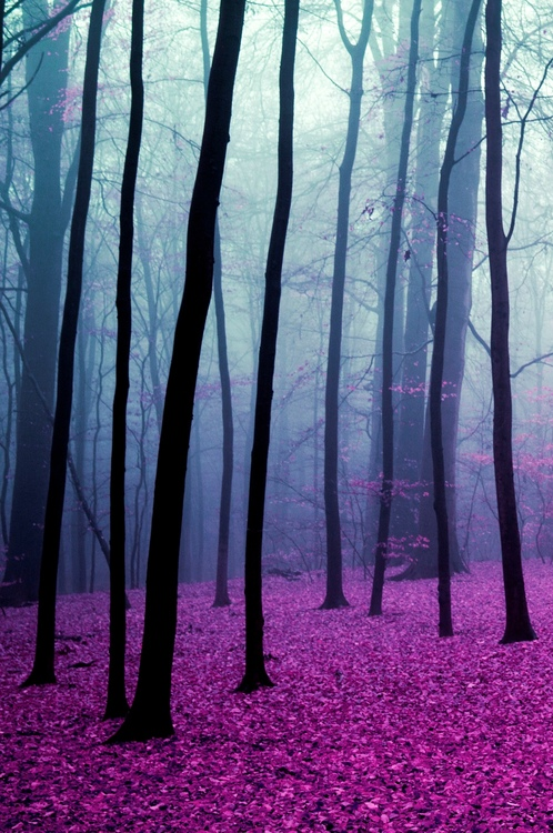 germany_black_forest