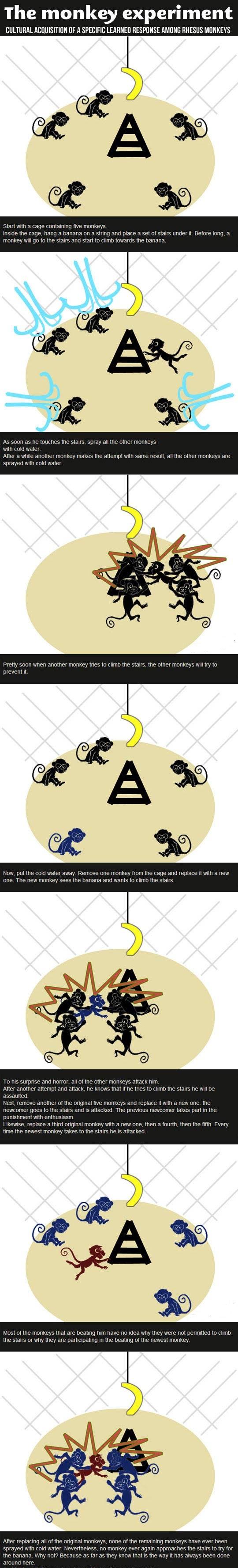 monkey-experiment