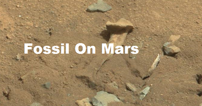 Is This – RevJamesBJones Evidence Of Life On Mars